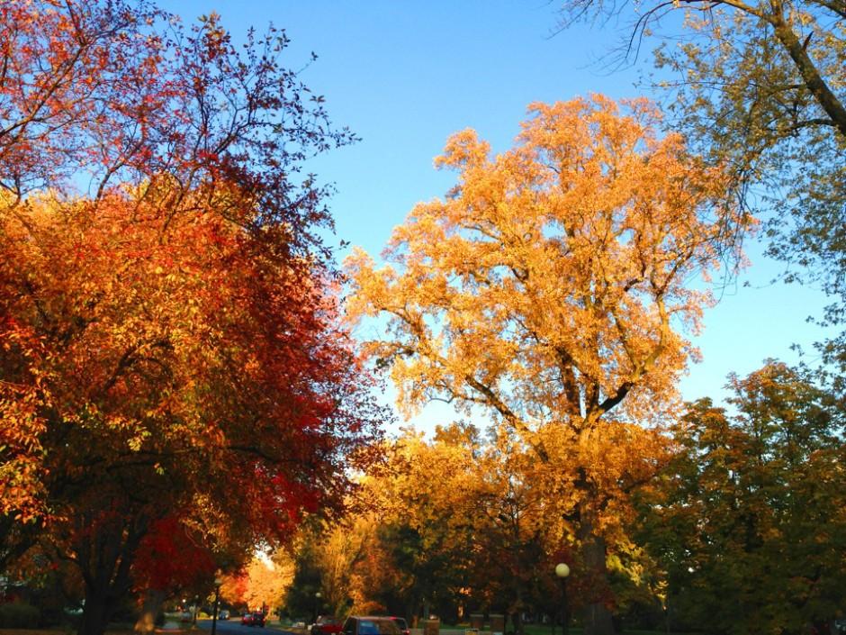 fall photo edited 2
