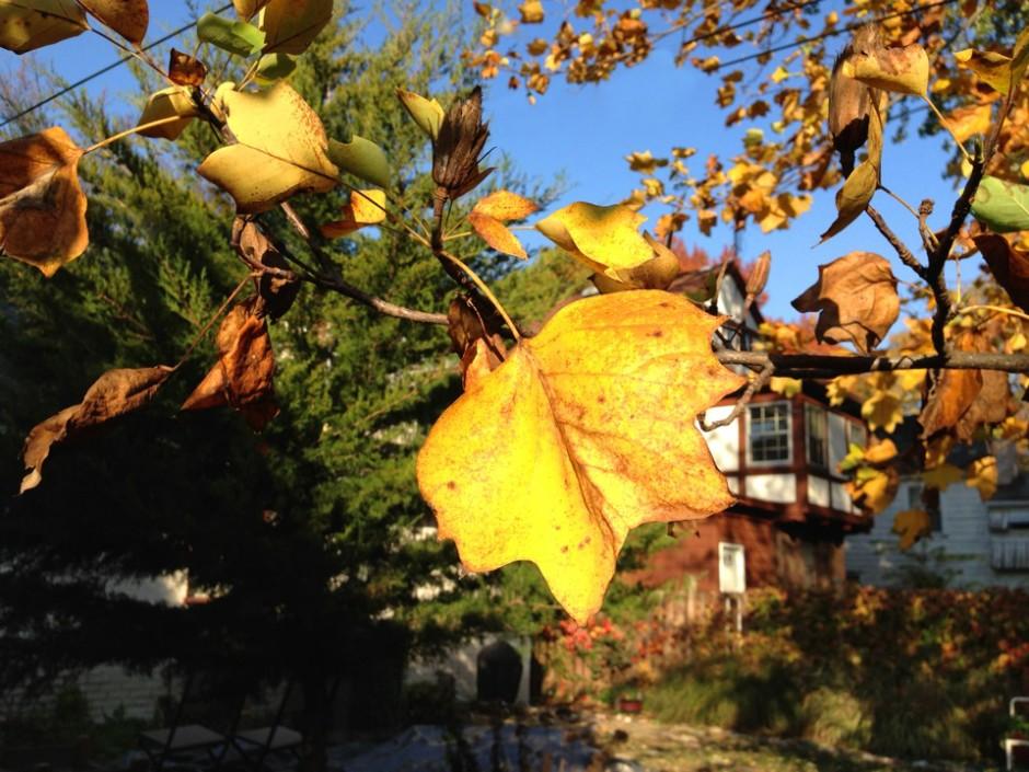 fall photo edited 5